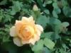 Gardener Jo
