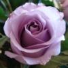 anya.rose